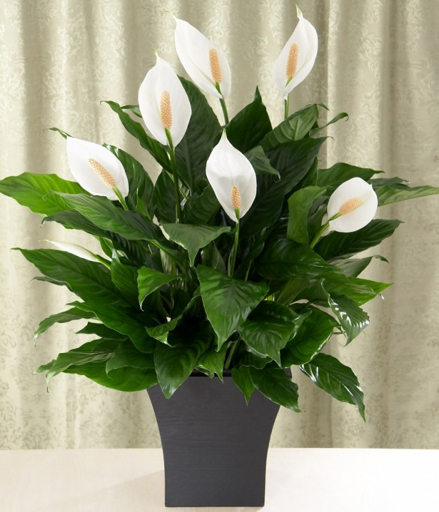Get more plants in your home for Oxygen   The Islamic Email Circle Funeral Plants For The Home on plants to send for sympathy, plants for funeral service, plants for cemetery, plants given at funerals, plants for church, plants sent to funerals, plants for a funeral,